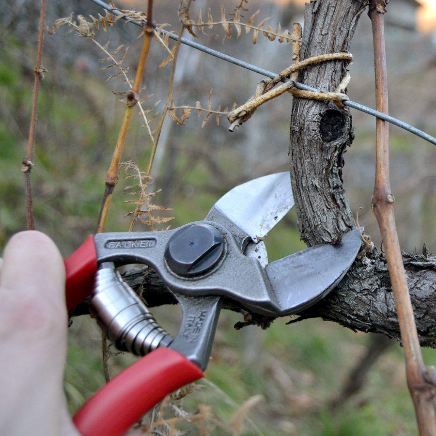 Double cut maxi scissors Falket